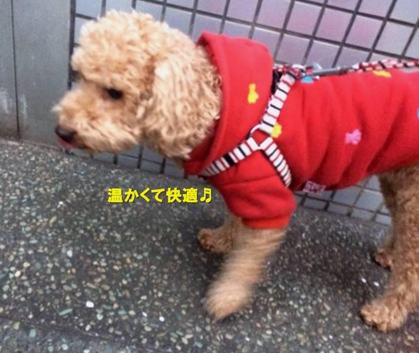 f:id:nanachan59:20200112172941j:plain