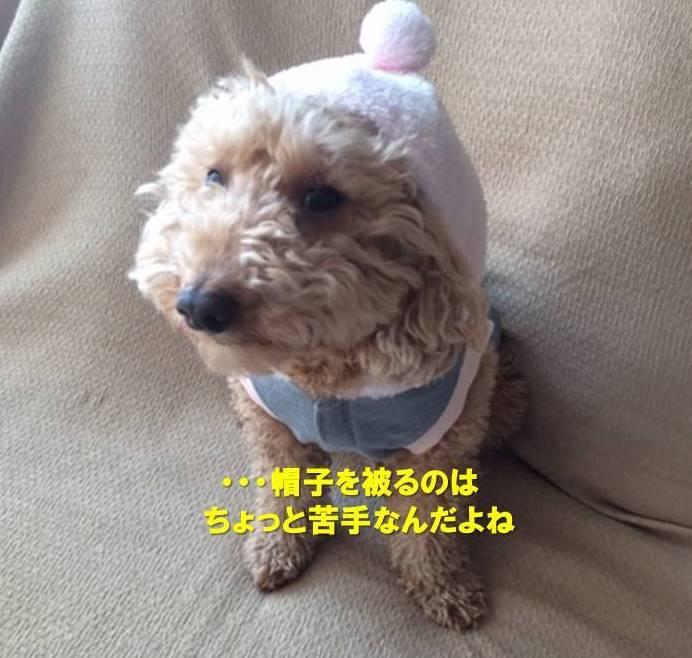 f:id:nanachan59:20200112173746j:plain