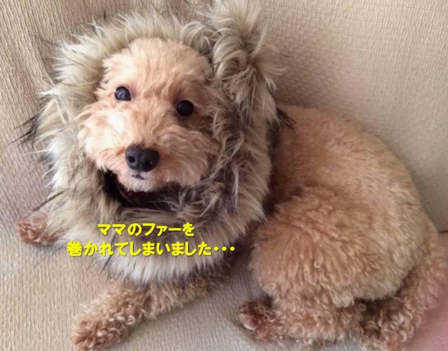 f:id:nanachan59:20200112174316j:plain