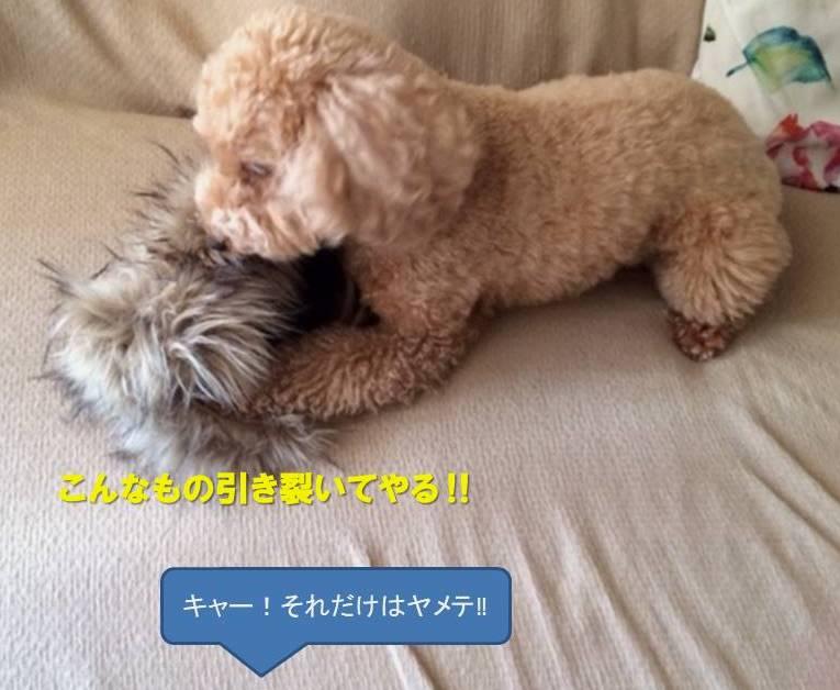 f:id:nanachan59:20200112175617j:plain