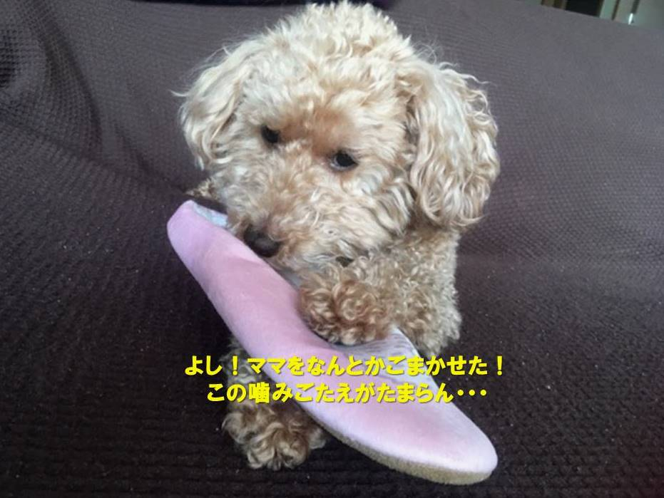 f:id:nanachan59:20200119165205j:plain