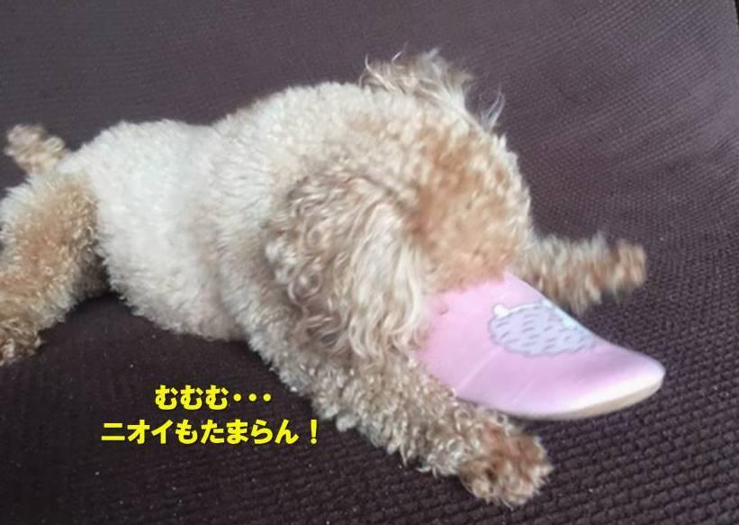f:id:nanachan59:20200119165625j:plain