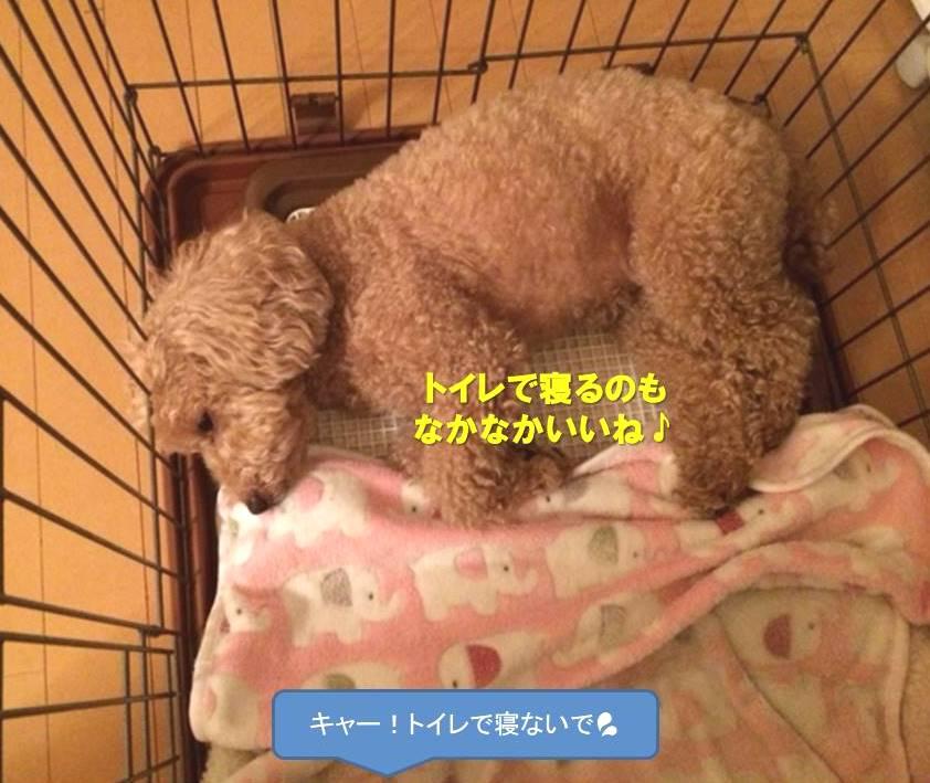 f:id:nanachan59:20200123163359j:plain