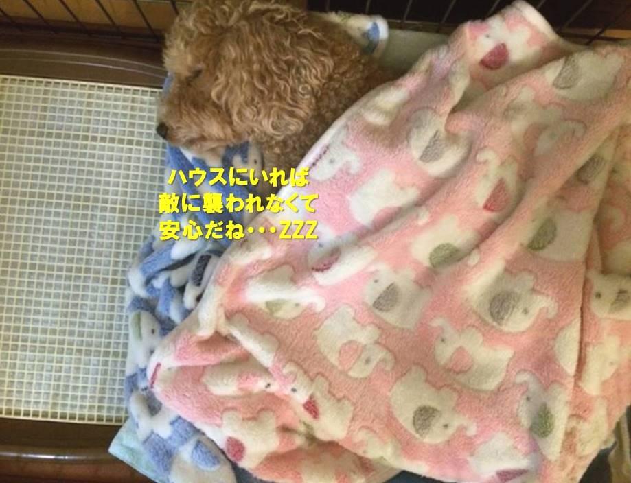 f:id:nanachan59:20200124205824j:plain