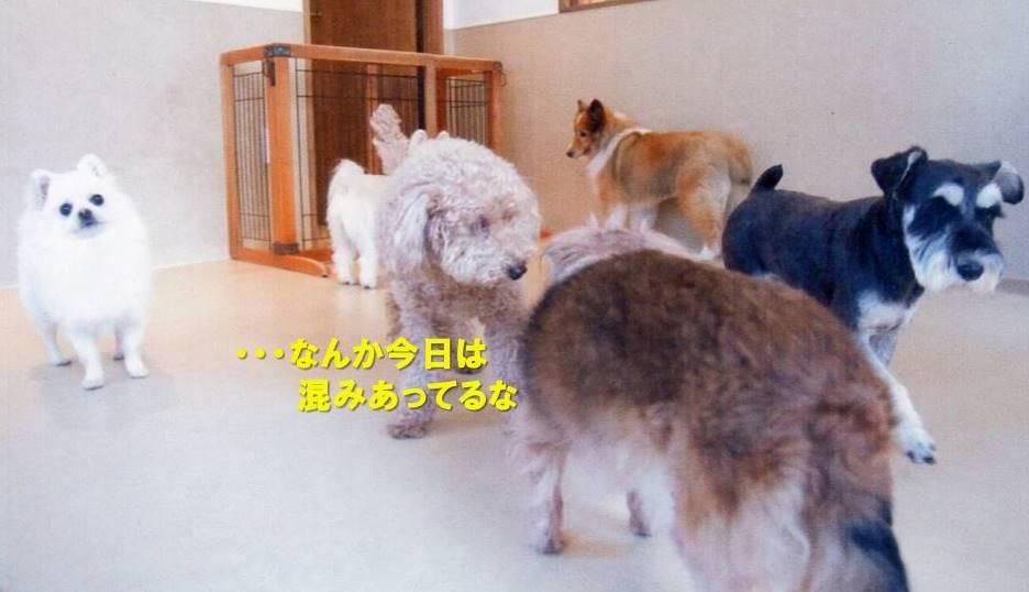 f:id:nanachan59:20200214165346j:plain