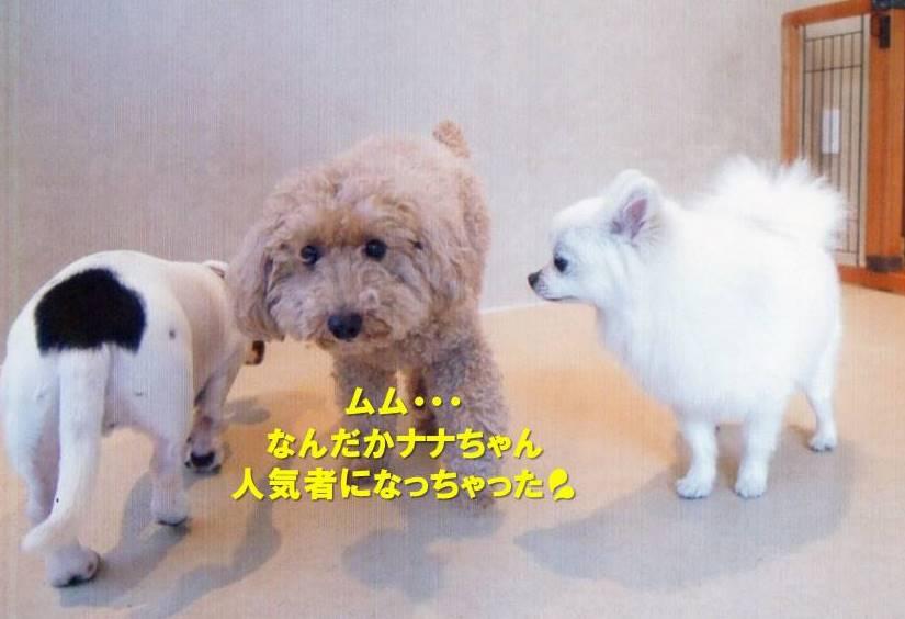 f:id:nanachan59:20200214165754j:plain