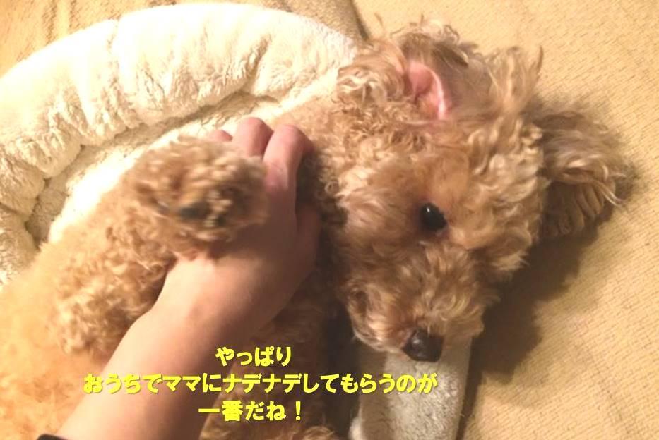 f:id:nanachan59:20200214171602j:plain