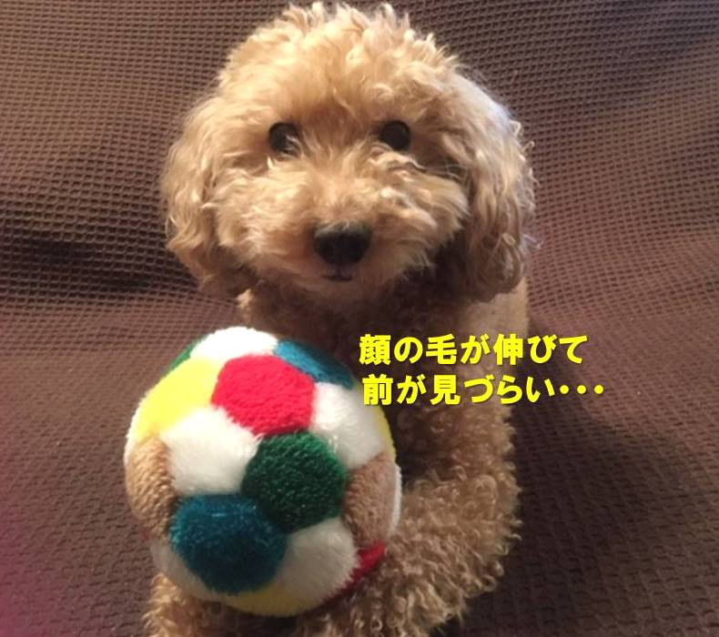f:id:nanachan59:20200221164532j:plain