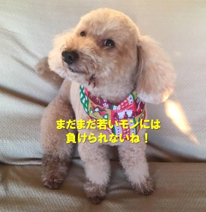 f:id:nanachan59:20200221165549j:plain