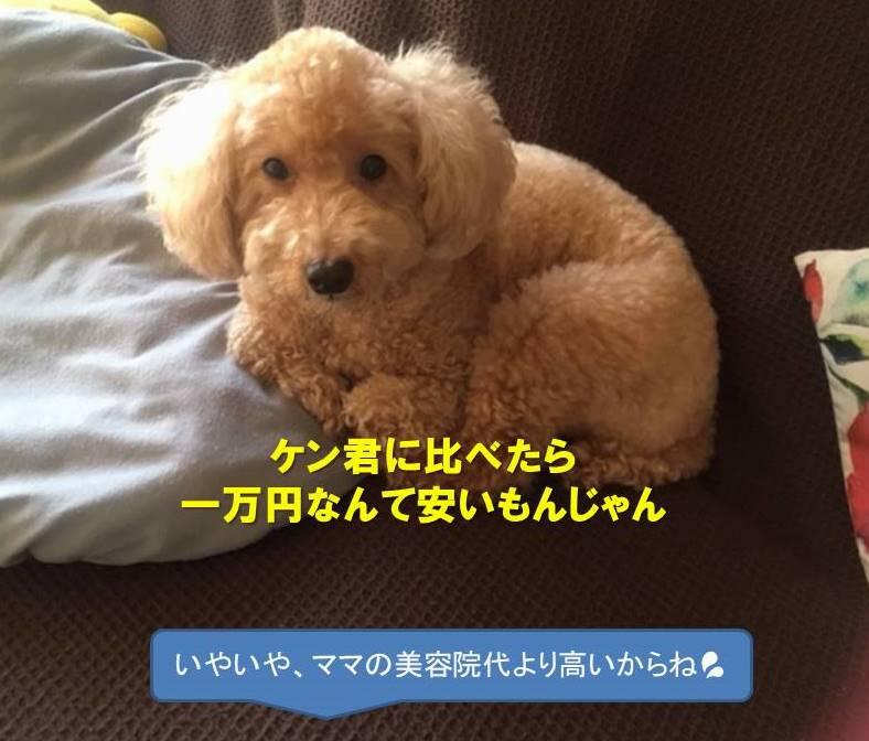 f:id:nanachan59:20200221170942j:plain