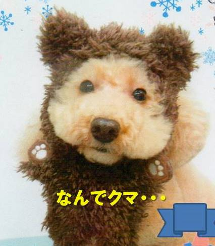 f:id:nanachan59:20200223031258j:plain