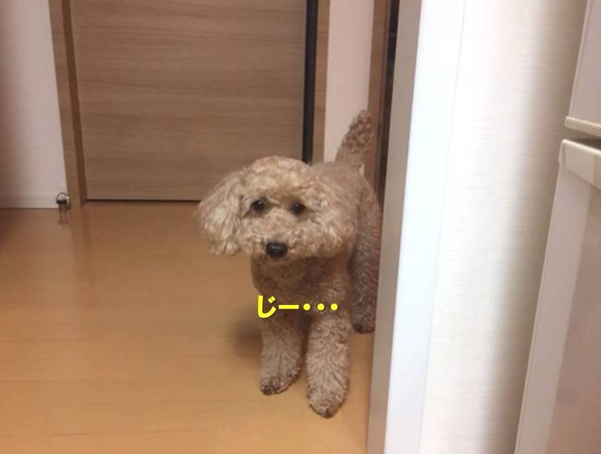 f:id:nanachan59:20200301175117j:plain