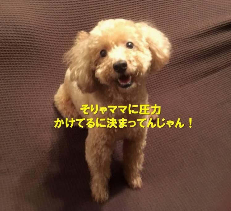 f:id:nanachan59:20200301181016j:plain