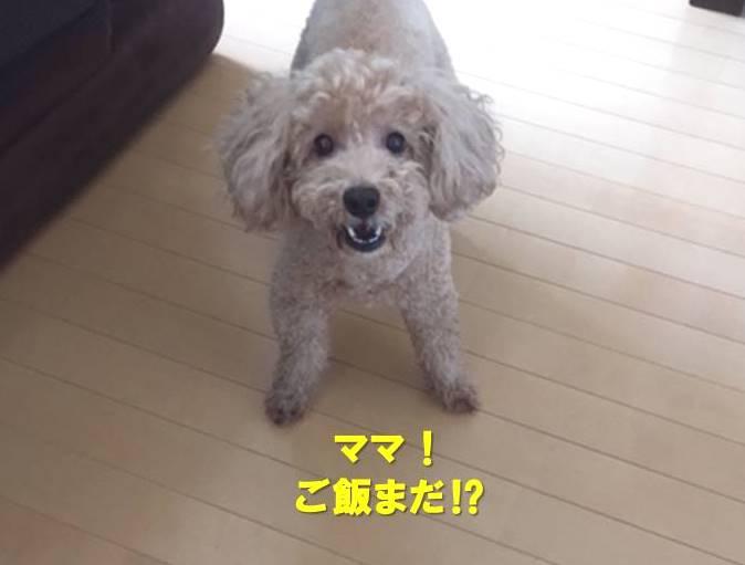f:id:nanachan59:20200306173004j:plain