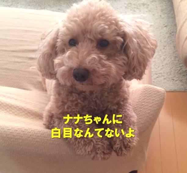 f:id:nanachan59:20200310190125j:plain