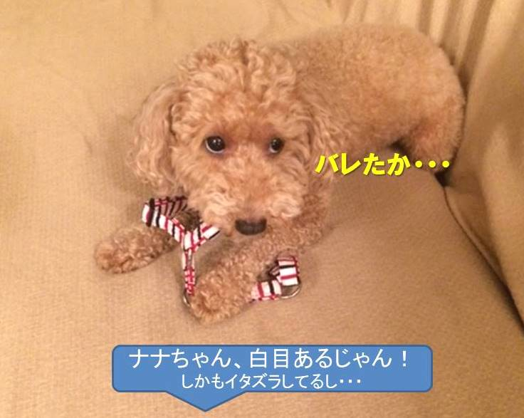 f:id:nanachan59:20200310190929j:plain