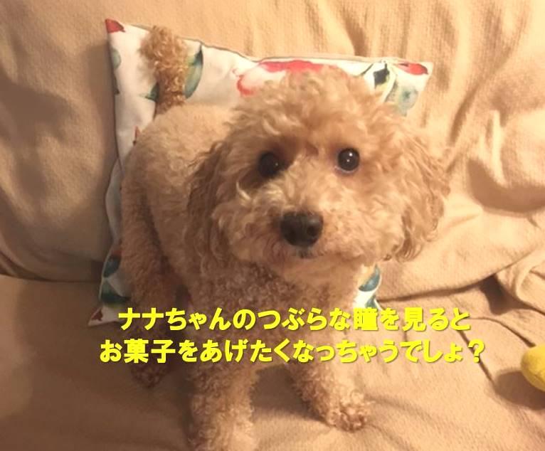 f:id:nanachan59:20200310191823j:plain