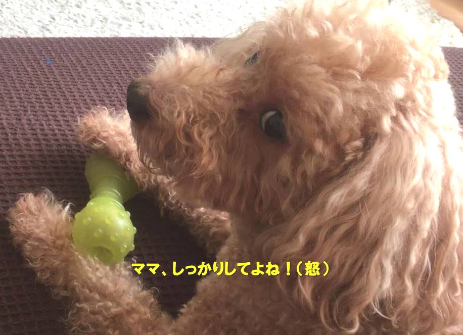 f:id:nanachan59:20200320164623j:plain