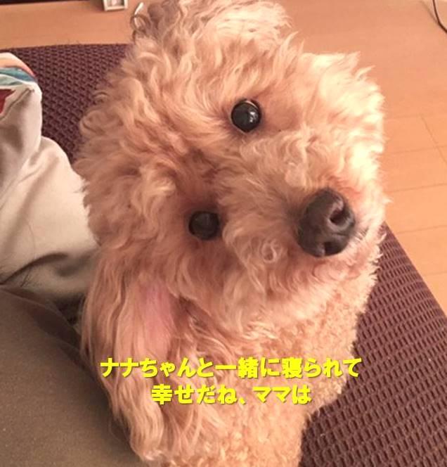 f:id:nanachan59:20200329171802j:plain