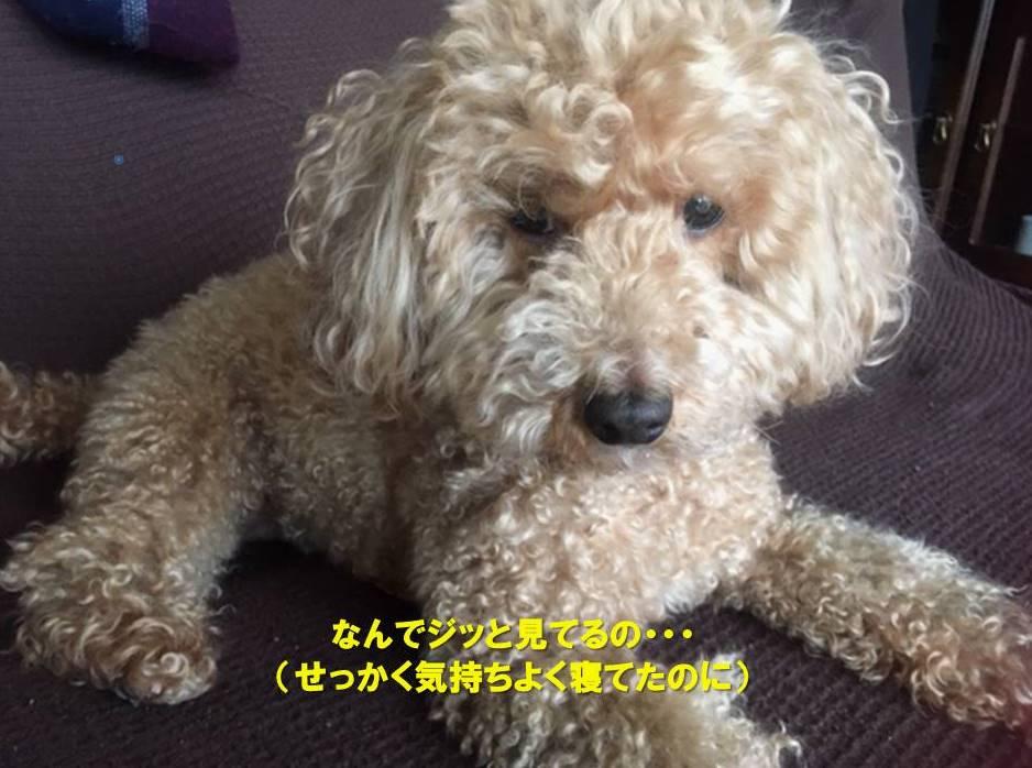 f:id:nanachan59:20200415173636j:plain