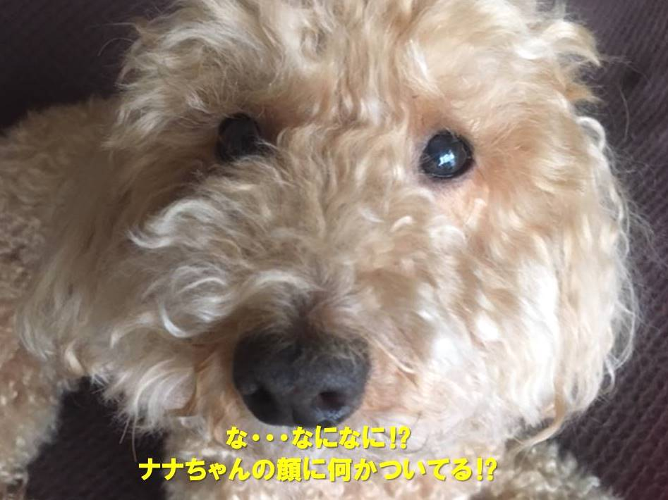 f:id:nanachan59:20200415174207j:plain