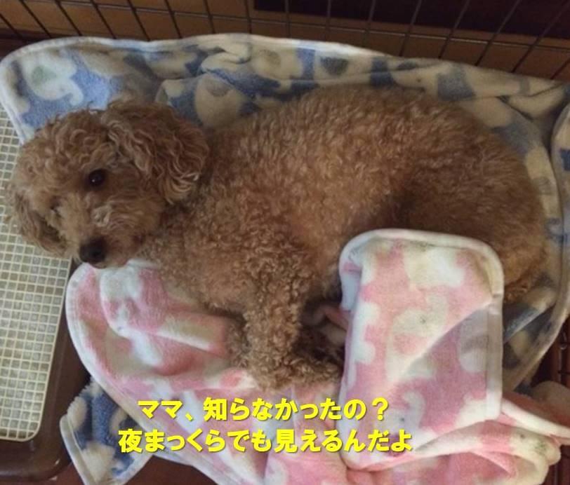 f:id:nanachan59:20200415174902j:plain