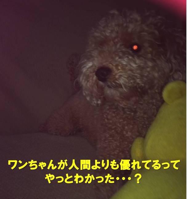 f:id:nanachan59:20200415175617j:plain