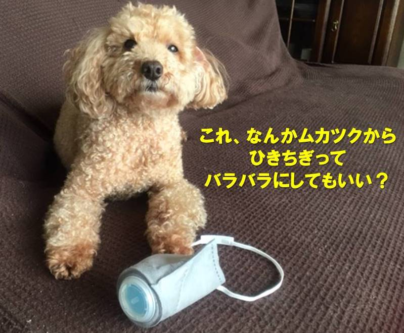 f:id:nanachan59:20200510223407j:plain