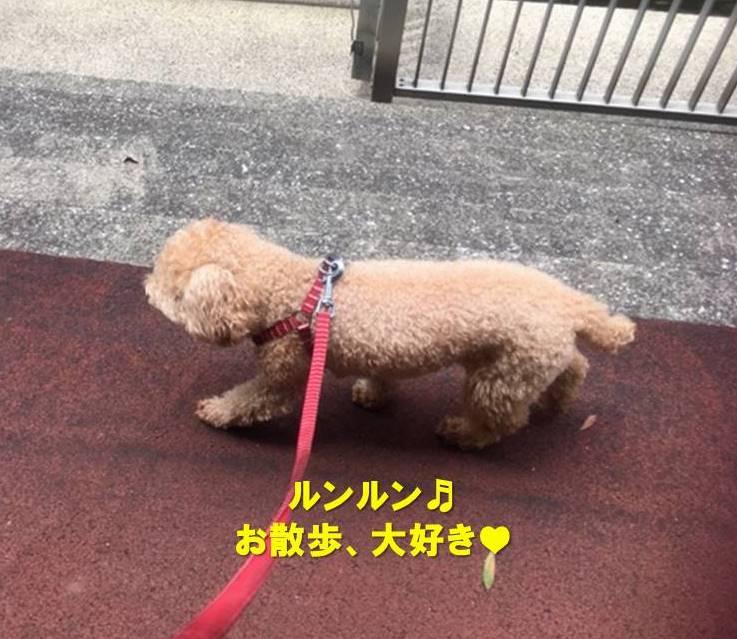 f:id:nanachan59:20200522170741j:plain