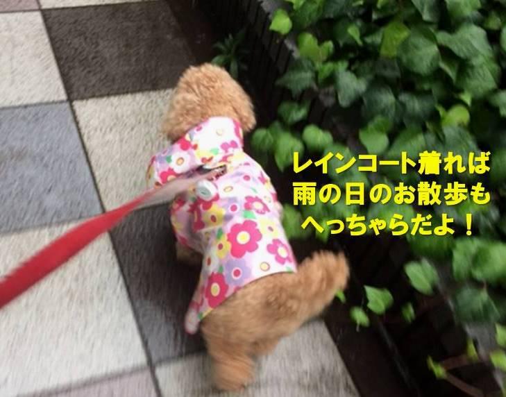 f:id:nanachan59:20200522171455j:plain