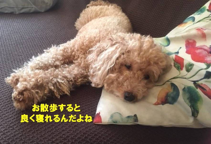f:id:nanachan59:20200522175259j:plain