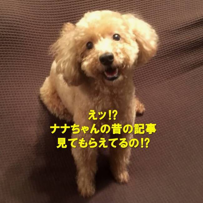 f:id:nanachan59:20200623122328j:plain