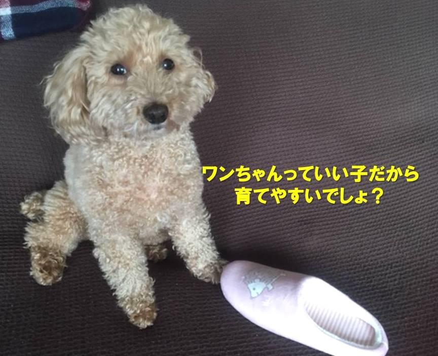 f:id:nanachan59:20200623134326j:plain