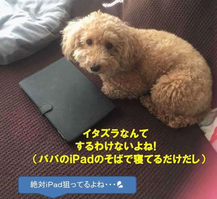 f:id:nanachan59:20200623135720j:plain