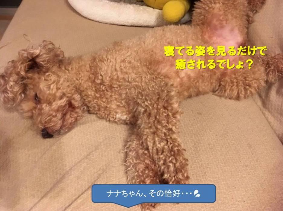 f:id:nanachan59:20200623140223j:plain