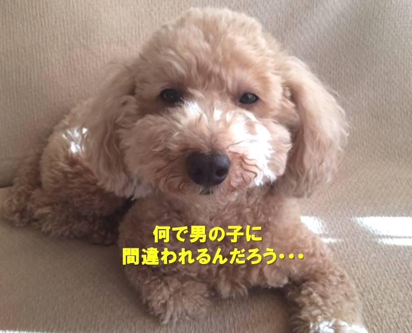 f:id:nanachan59:20200628125745j:plain