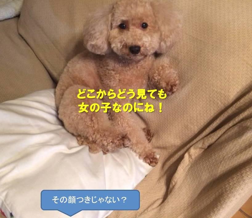 f:id:nanachan59:20200628130328j:plain