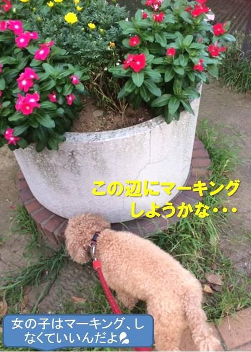 f:id:nanachan59:20200706170039j:plain