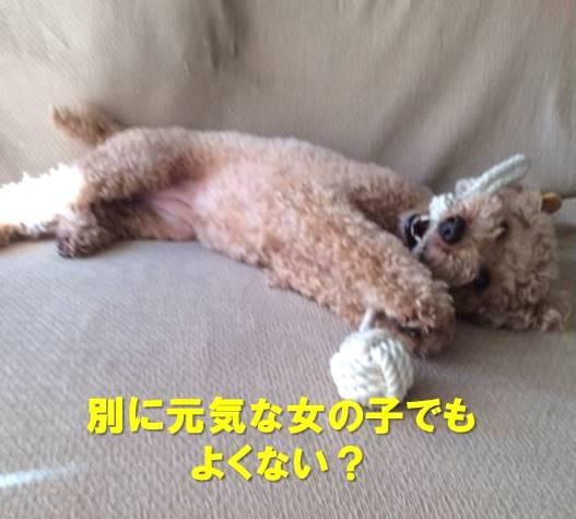 f:id:nanachan59:20200706170702j:plain