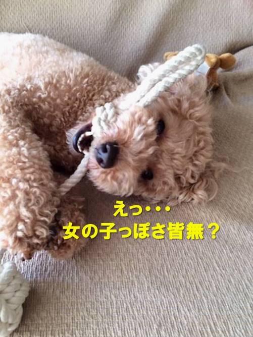 f:id:nanachan59:20200706171044j:plain