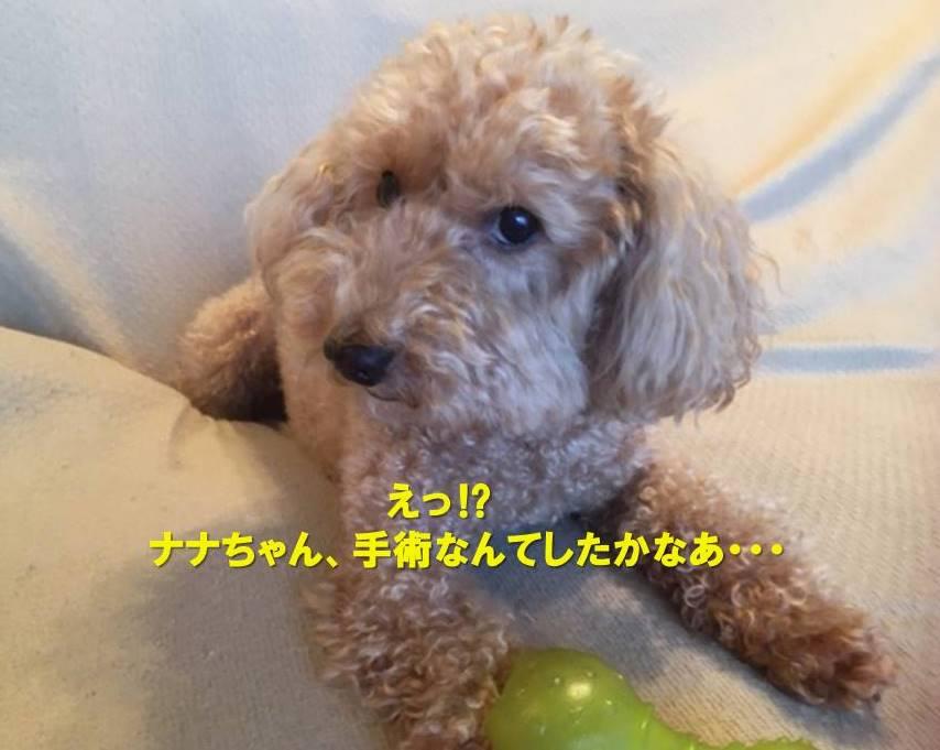 f:id:nanachan59:20200724230452j:plain
