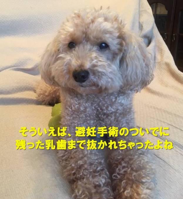 f:id:nanachan59:20200724233058j:plain
