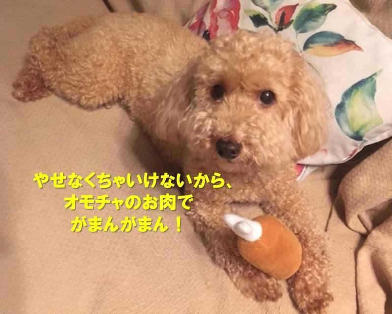 f:id:nanachan59:20200724233807j:plain