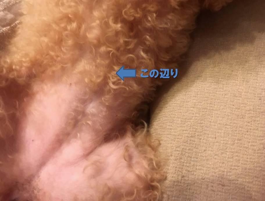 f:id:nanachan59:20200802155230j:plain
