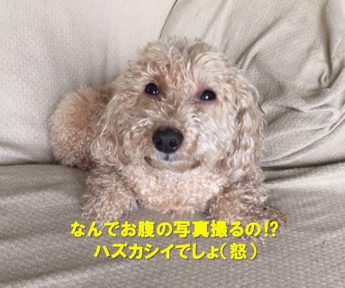 f:id:nanachan59:20200802155842j:plain