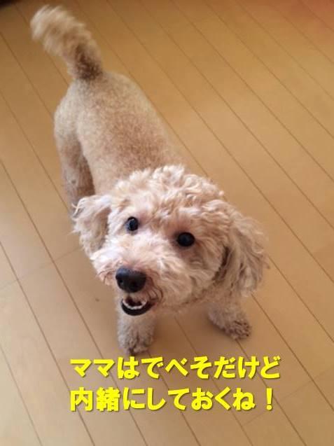 f:id:nanachan59:20200802160721j:plain
