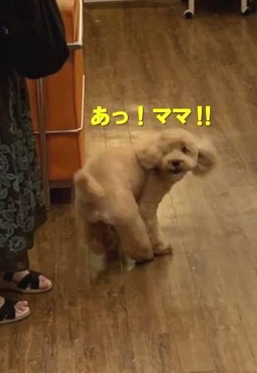 f:id:nanachan59:20200930132511j:plain