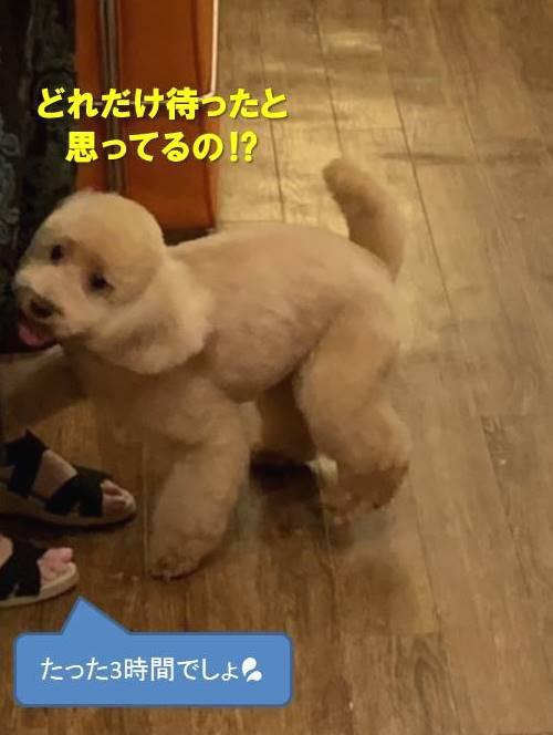 f:id:nanachan59:20200930133759j:plain