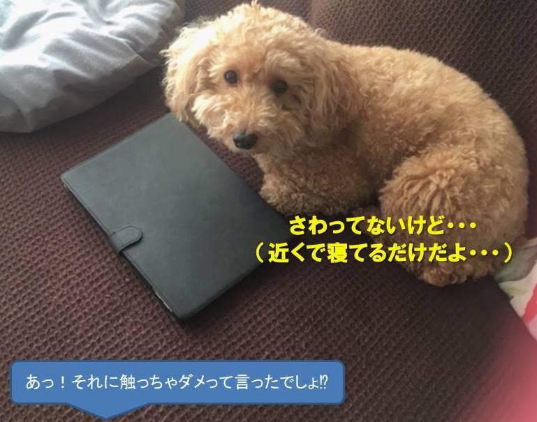 f:id:nanachan59:20201009171548j:plain