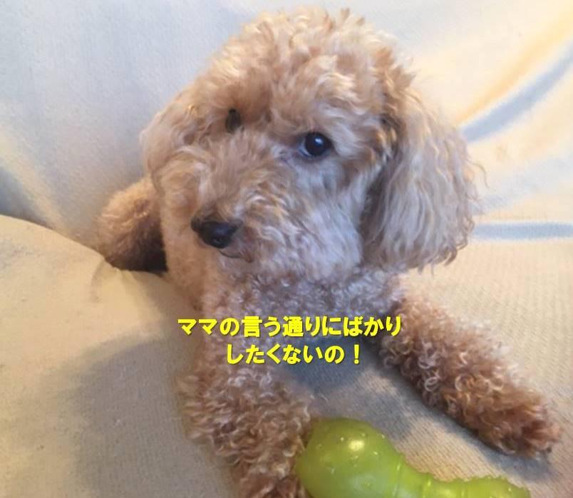 f:id:nanachan59:20201009172424j:plain